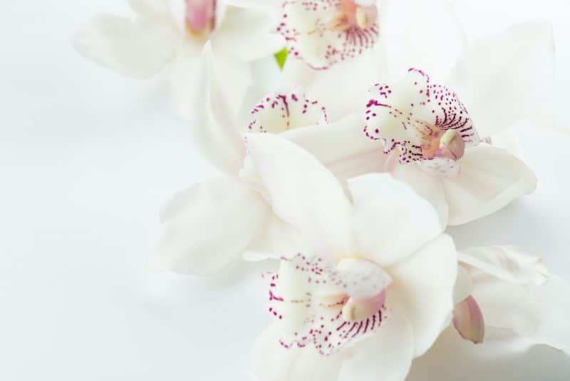 meilleurs fleuristes epernay unsplash