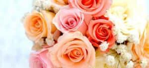 fleuriste anemone troyes